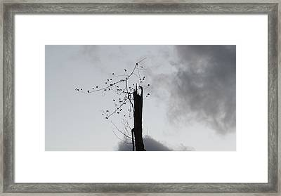 Snapped Framed Print