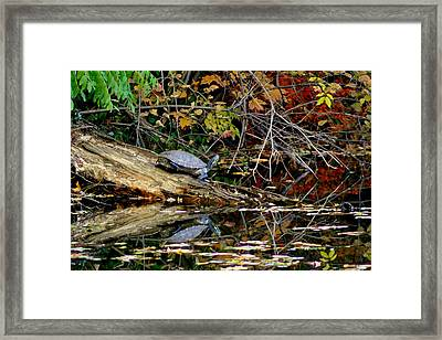 Snapper Turtle Framed Print by Frozen in Time Fine Art Photography