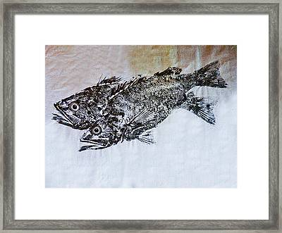 Snapper Framed Print by William Fields