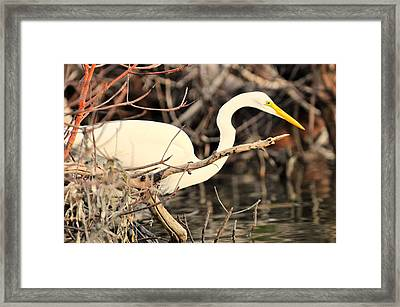 Sneaky Framed Print by Barry R Jones Jr