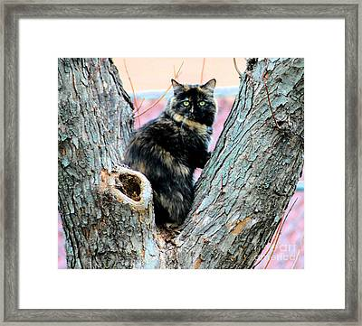 Snickers Caught In The Act Framed Print by Cheryl Poland