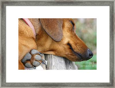 Sniffing Out Dreams Framed Print