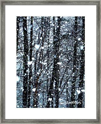 Snoball Flakes Framed Print by Ruth Bodycott