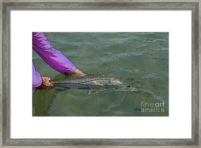 Snook Revival Framed Print by Alex Suescun