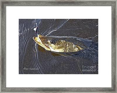 Snook Slider Framed Print by Alex Suescun