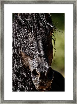 Snorting Good Looks Framed Print by Wes and Dotty Weber