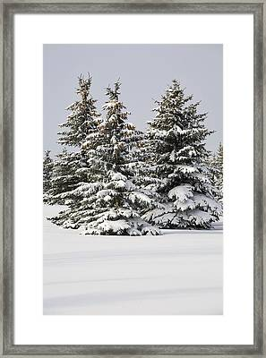 Snow Covered Evergreen Trees Calgary Framed Print by Michael Interisano