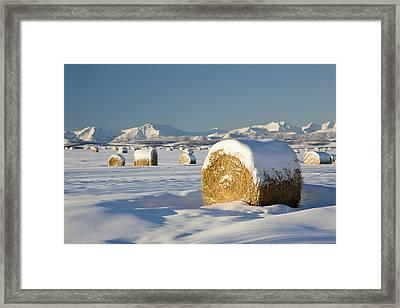 Snow-covered Hay Bales Okotoks Framed Print by Michael Interisano