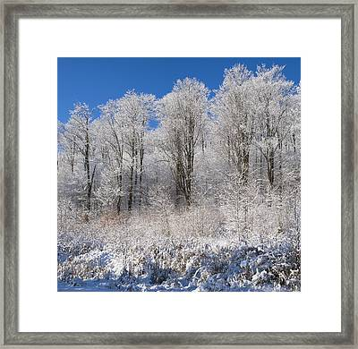 Snow Covered Maple Trees Iron Hill Framed Print by David Chapman