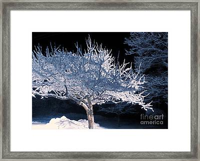 Snow-covered Tree At Night Framed Print