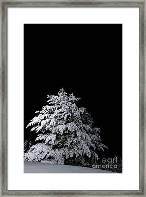 Snow-covered Tree Framed Print by HD Connelly