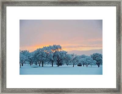 Snow Covered Trees At Sunset Framed Print by Nancy Newell