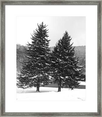 Snow Covered Trees Framed Print by Carrie Munoz