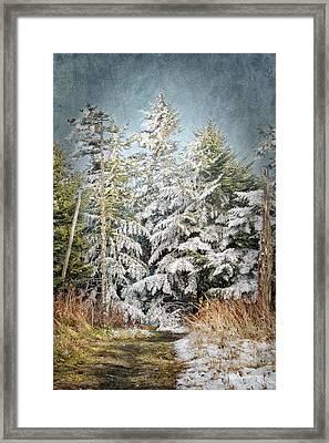 Snow Covered Trees Framed Print by Cheryl Davis