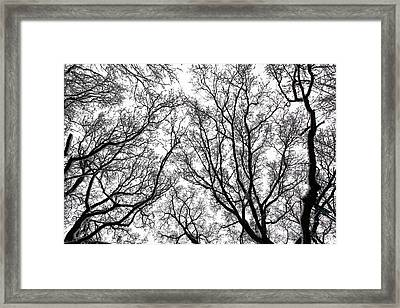 Snow Covered Trees Framed Print by Richard Newstead