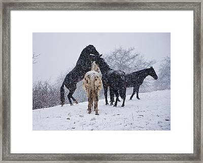 Snow Day I Framed Print by Betsy Knapp