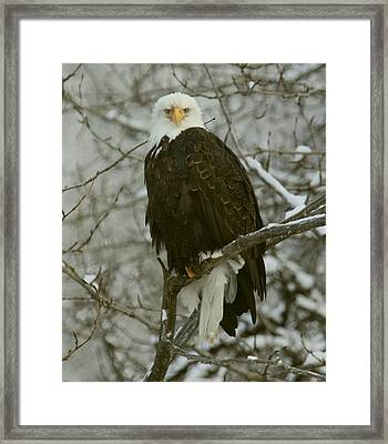 Framed Print featuring the photograph Snow Eagle by Myrna Bradshaw
