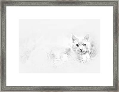 Snow Eyes Framed Print