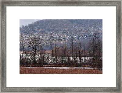 Snow Geese Rising Framed Print
