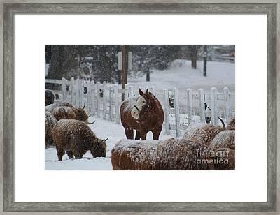 Snow Horse Framed Print by Linda Jackson