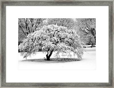 Snow In Connecticut Framed Print