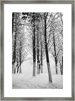 Snow In The Forest Framed Print by Huchen Lu