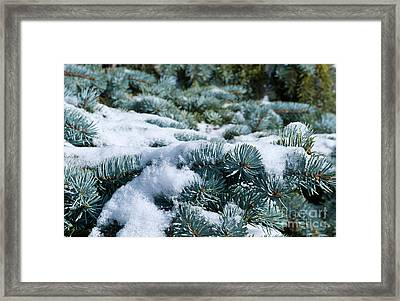 Framed Print featuring the photograph Snow In The Pines by Charles Lupica