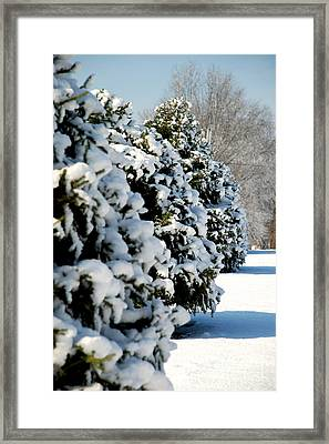 Framed Print featuring the photograph Snow In The Trees by Mark Dodd