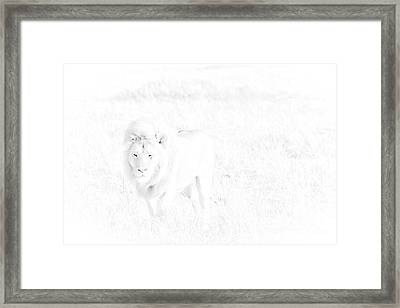 Snow Lion Framed Print by Darcy Michaelchuk