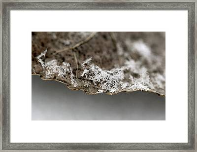 Snow On A Leaf Framed Print