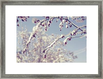 Snow On Spring Blossom Branches Framed Print by Bonita Cooke