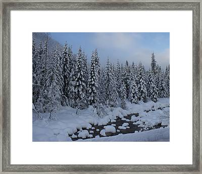Snow Pines Framed Print by Sylvia Hart