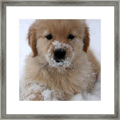 Snow Puppy Framed Print