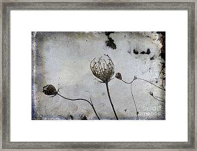 Snow Seeds Framed Print by Paul Grand