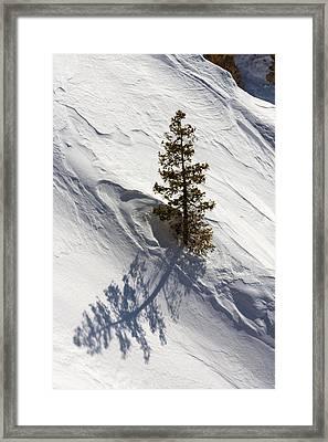 Snow Shadow Framed Print