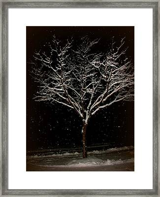 Snow Shower In The Night Framed Print