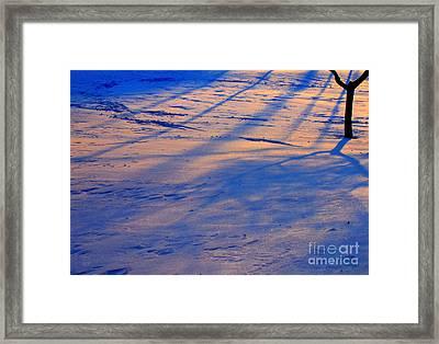 Snow Tree Framed Print