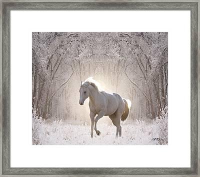 Snow White Framed Print by Bill Stephens