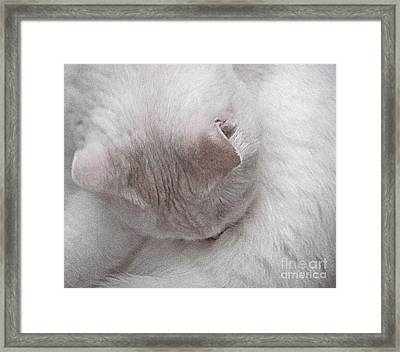 Snow White Cat Framed Print by Janeen Wassink Searles