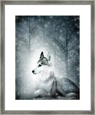 Snow Wolf Framed Print
