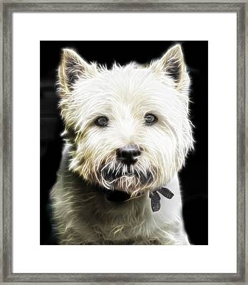 Snowball Framed Print by Tilly Williams