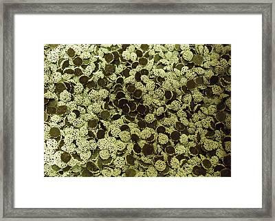 Snowcaps Framed Print