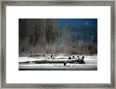 Snowed In Framed Print by Carrie OBrien Sibley