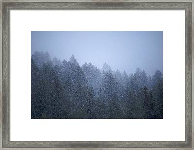 Snowfall In The Forest Framed Print by C Thomas Willard