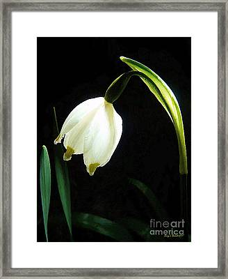 Snowflake Flower Framed Print by Jerry L Barrett
