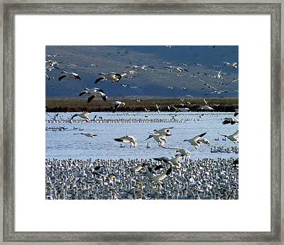 Snowing On Lower Klamath Lake Framed Print by Cindy Wright