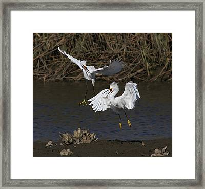 Snowy Battle Framed Print by Phil Lanoue