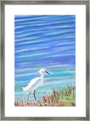Snowy Egret At Sanibel Island Framed Print
