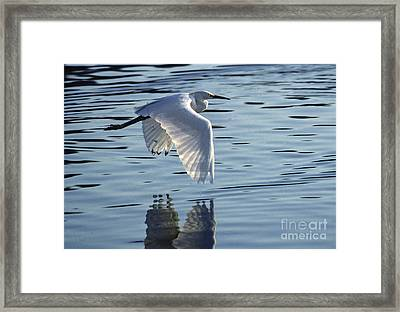 Framed Print featuring the photograph Snowy Egret In Flight by Craig Lovell