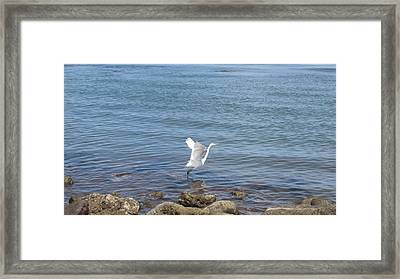 Framed Print featuring the photograph Snowy Egret by Marilyn Wilson